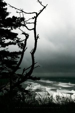 Oregon Silhouette