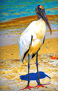 Stork  posing