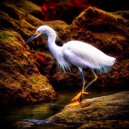 Egret Hunting on Mars