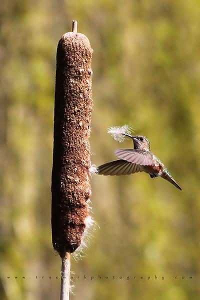 Nest Builder