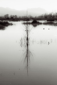 B&W minimalist reflection at Gray Lodge Wildlife Preserve