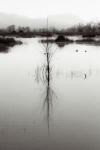 B&W minimalist reflection at Gray Lodge Wildlife Preserve