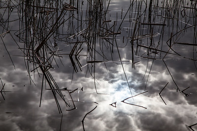 Clouds and reeds reflection at Gray Lodge Wildlife Preserve