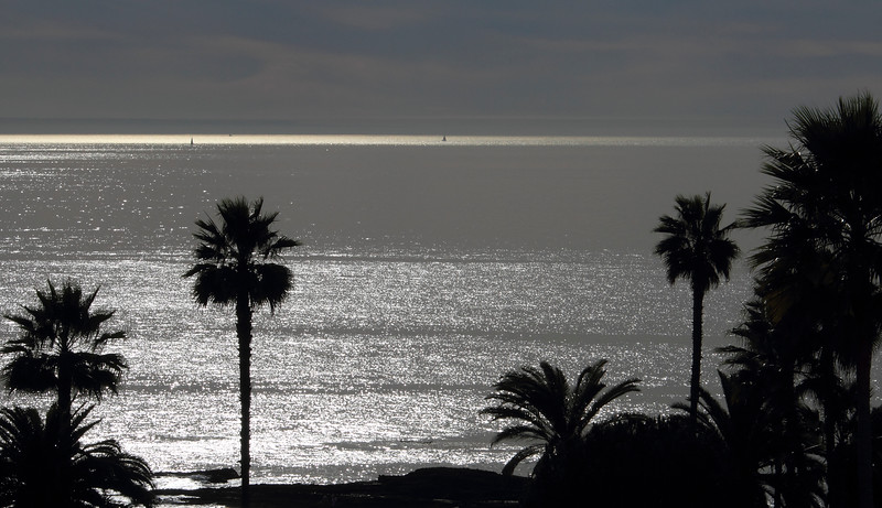 Palm Tree Shadows and Sails Laguna©2014 MelissaFaithKnight&FaithPhotographyNV --2