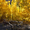 12 x 8 McGee Canyon Fall Colors ©2016MelissaFaithKnight&FaithPhotographyNV_1298