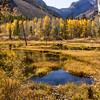 Aspens in Autumn ©2014MelissaFaithKnight #9679- -