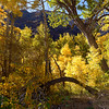 12x8 McGee Canyon Fall Colors ©2016MelissaFaithKnight&FaithPhotographyNV_1319