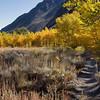 12x8 McGee Canyon Fall Colors ©2016MelissaFaithKnight&FaithPhotographyNV_1325