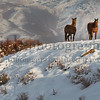"""Winters Four Horses"""