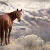 8x12 Wild HOrses Carson Valley 2017MelissaFaithKnightFaithPhotographyNV_1057 2