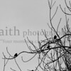 Sparrow Shadows in Winter ©2015 MelissaFaithKnight&FaithPhotographyNV -