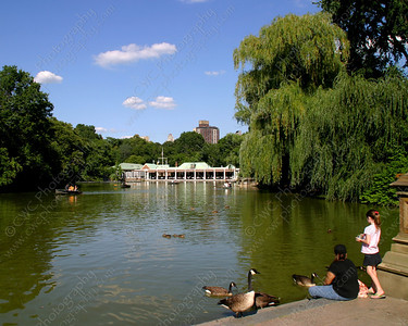 NEW! 6014-Feeding the ducks at a lake in Central Park (8x10)