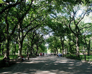 NEW! 6034-A tree-lined path in Central Park in New York (8x10)