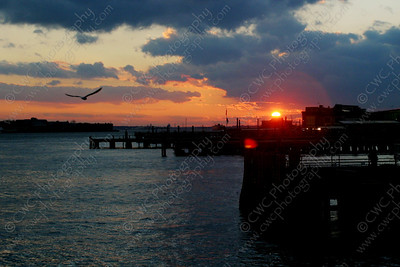 NEW! 5015-A bird flies toward the setting sun (8x12)