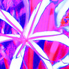 intitled flower abstract