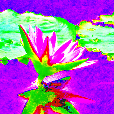 abstract water lily