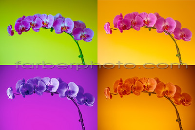orchid quartet 16x24 copy