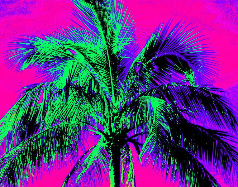 Stylized palm tree photo.