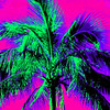 Stylized palm tree phto.