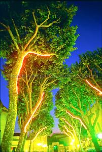 trees copyb-2 (1)