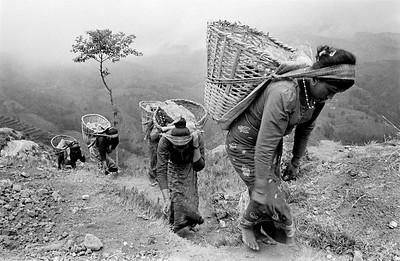 Tamang Women (edition 3/25)
