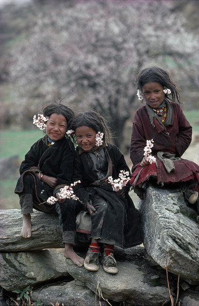 Spring's Gift, Peach Blossoms. Humla, Nepal. (edition 3/25)