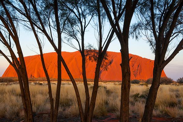 Uluru and trees