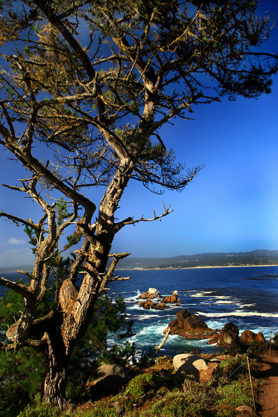 Point_Lobos_Whalers_Cove_104