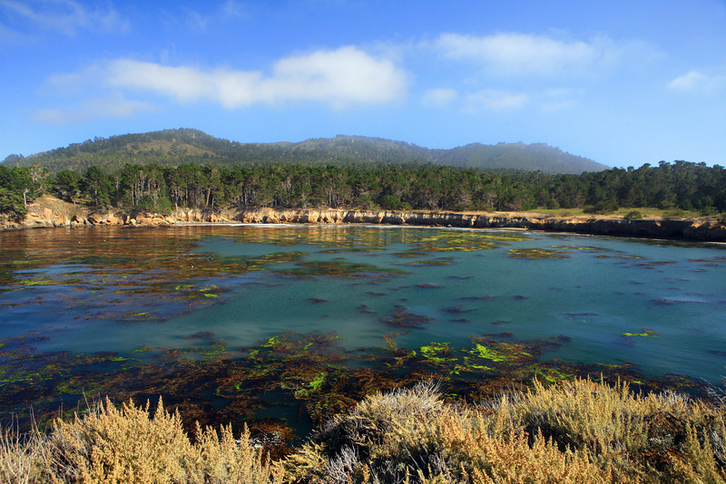 Point_Lobos_Whalers_Cove_102