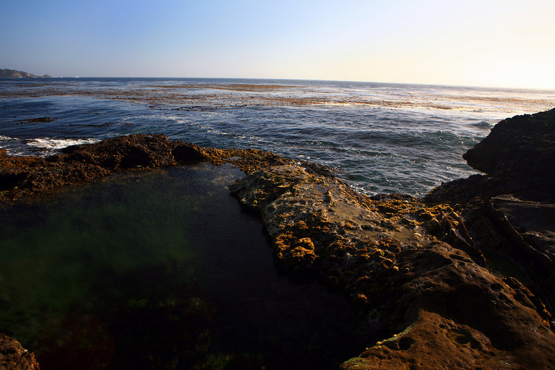 Point_Lobos_State_Reserve_Tide_Pool__2334