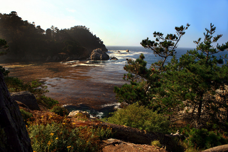 Point_Lobos_Whalers_Cove_106