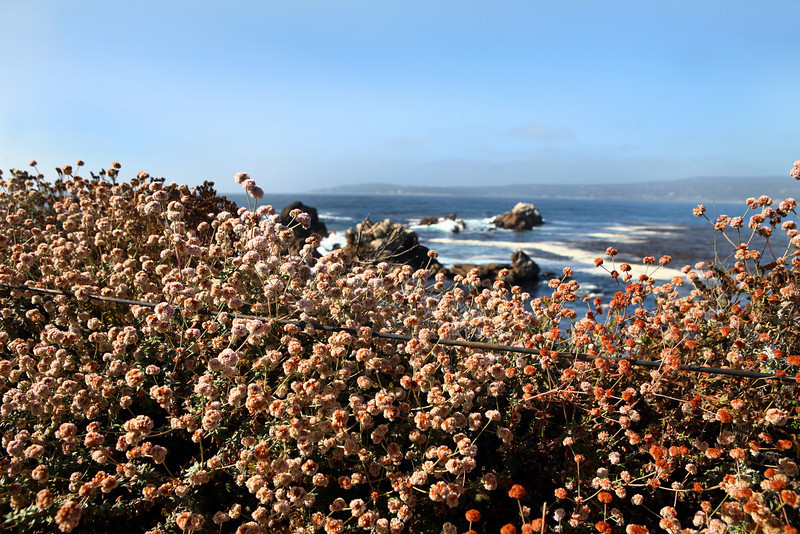 Point_Lobos_Whalers_Cove_100