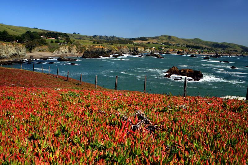 Bodega Bay_CA_Coast_1600