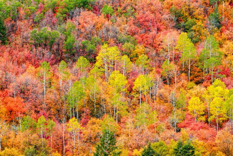 Autumn  at Sundance - Wasatch Mountains - Utah