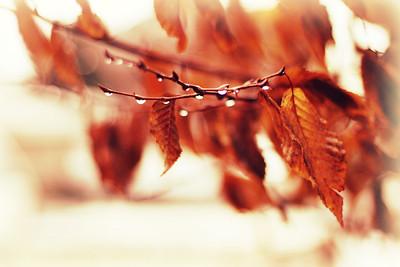 Fall Symphony