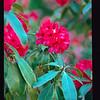 2021-05-23 Crystal Springs Rhododendron Garden-27