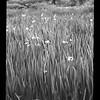2021-05-23 B&W Film Garden-23