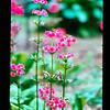 2021-05-23 Crystal Springs Rhododendron Garden-26