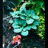 2021-05-23 Crystal Springs Rhododendron Garden-21