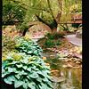 2021-05-23 Crystal Springs Rhododendron Garden-33