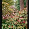 2021-05-23 Crystal Springs Rhododendron Garden-25