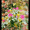 2021-05-23 Crystal Springs Rhododendron Garden-24