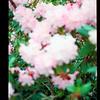 2021-05-23 Crystal Springs Rhododendron Garden-22