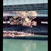 2021-04-10 Portland Waterfront-9
