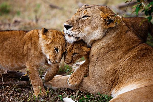 Momma and her cubs, Maasai Mara, Kenya