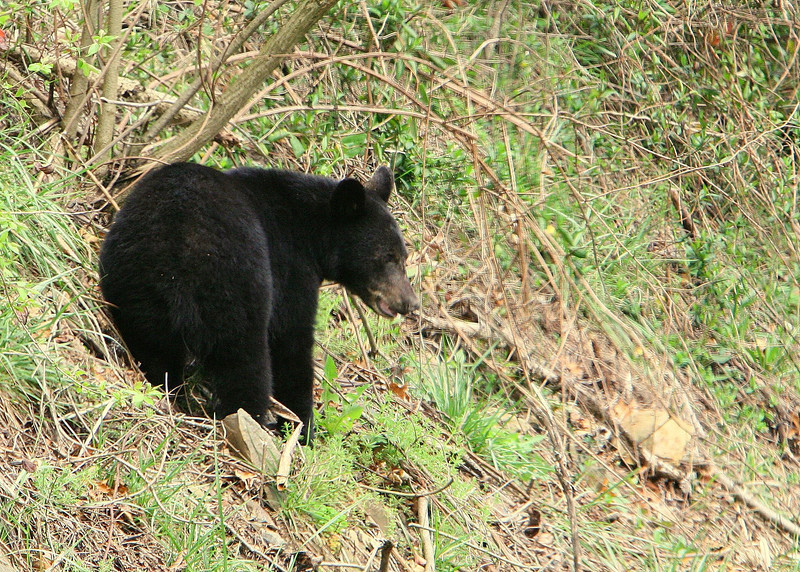 We actually saw a live black bear on the side of the road.