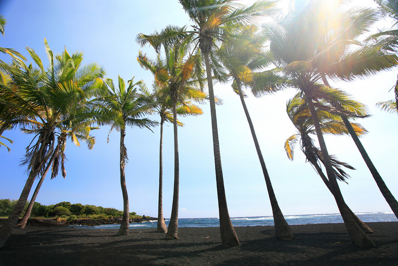 Hawaii_Black_Sand_Beach_Palm_Trees_020111
