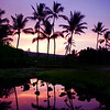 """Palm Tree Reflection,Sunrise"" Kona, Hawaii   <br /> <br /> <br /> Images By Josh<br /> <br /> <br />  <a href=""http://www.imagesbyjosh.com"">http://www.imagesbyjosh.com</a>"