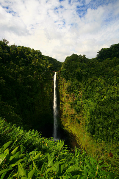 """Akaka Falls"" Big Island, Hawaii   <br /> <br /> Images By Josh<br /> <br /> <br />  <a href=""http://www.imagesbyjosh.com"">http://www.imagesbyjosh.com</a>"