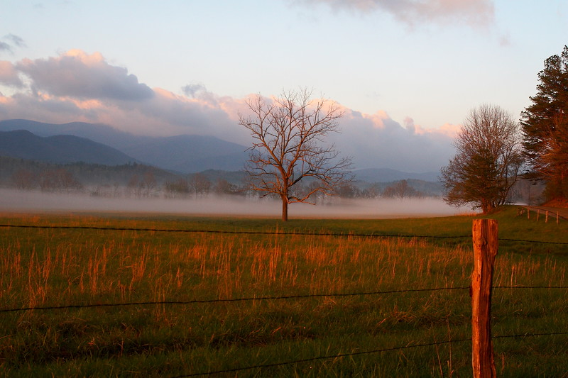 Cades Cove Morning fence row<br /> <br /> (C) J.L. McPhail Photography, Spotlightpicture.com